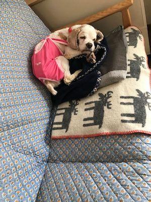 ソファで寝る桜香.jpg