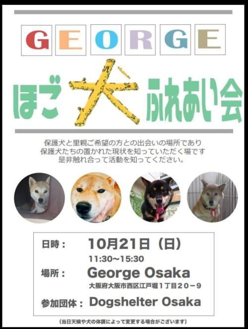 保護犬ふれあい会.jpg
