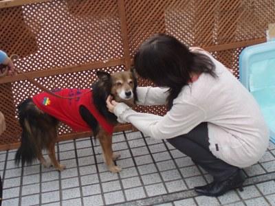 2011.11aoyama-p.jpg