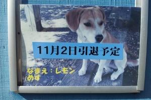 2012-11-02 10.41.07.jpg