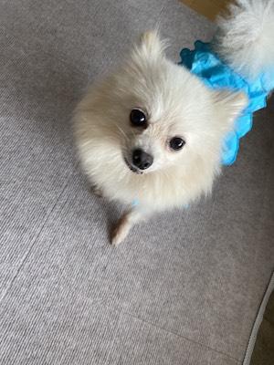 ice in blue dress.JPG