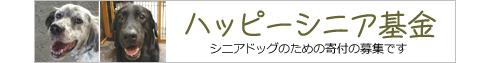 senior_banner-s.jpg